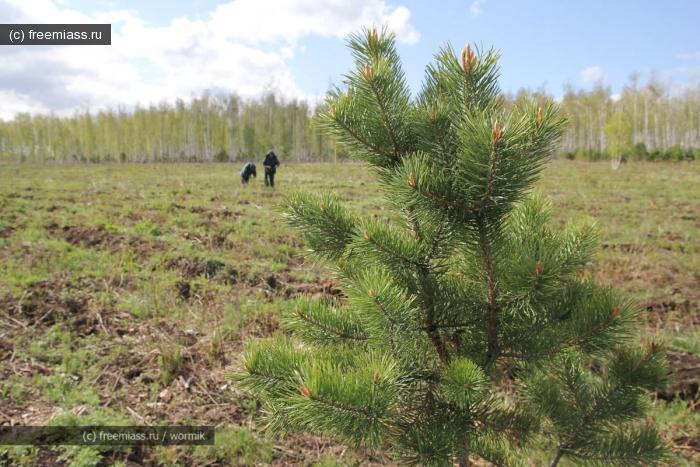 посади дерево,лес,миасс,пожарная охрана,в миассе,пожары,деревья,вырубки,новости миасса,события миасса
