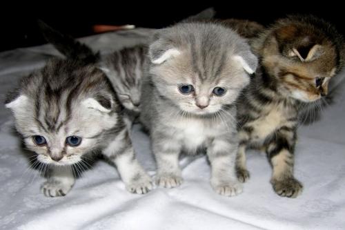 кошки миасс, кыськи миасс, миасс, фото миасс