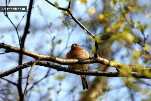 МЧС предупреждает - Весна идет, весне дорогу