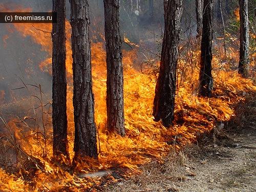 новости миасс, лесные пожары, миасс ру.