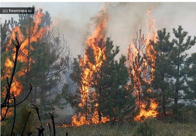 пожар миасс, пожар в лесу, горит лес, новости миасс, миасс ру, миасс онлайн, мчс миасс, лес миасс