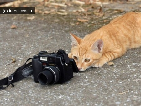 фото миасс, фотокросс миасс, свободный миасс, миасс ру, миасс онлайн, новости миасс