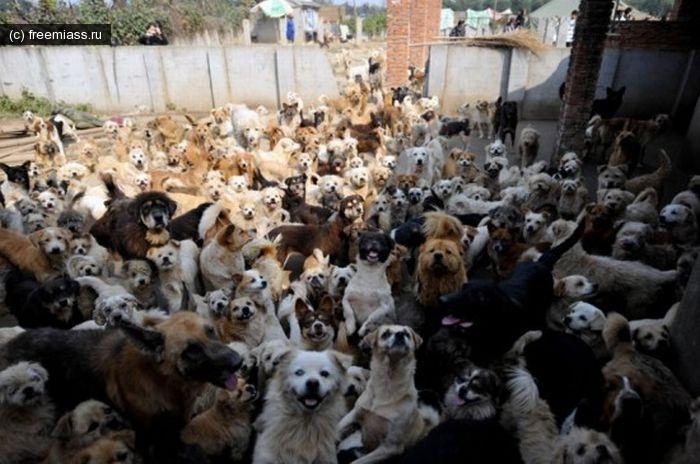 новости миасс, миасс ру, миасс онлайн, свободный миасс, собаки миасс, животные миасс, стандарты о животных,  закон о животных